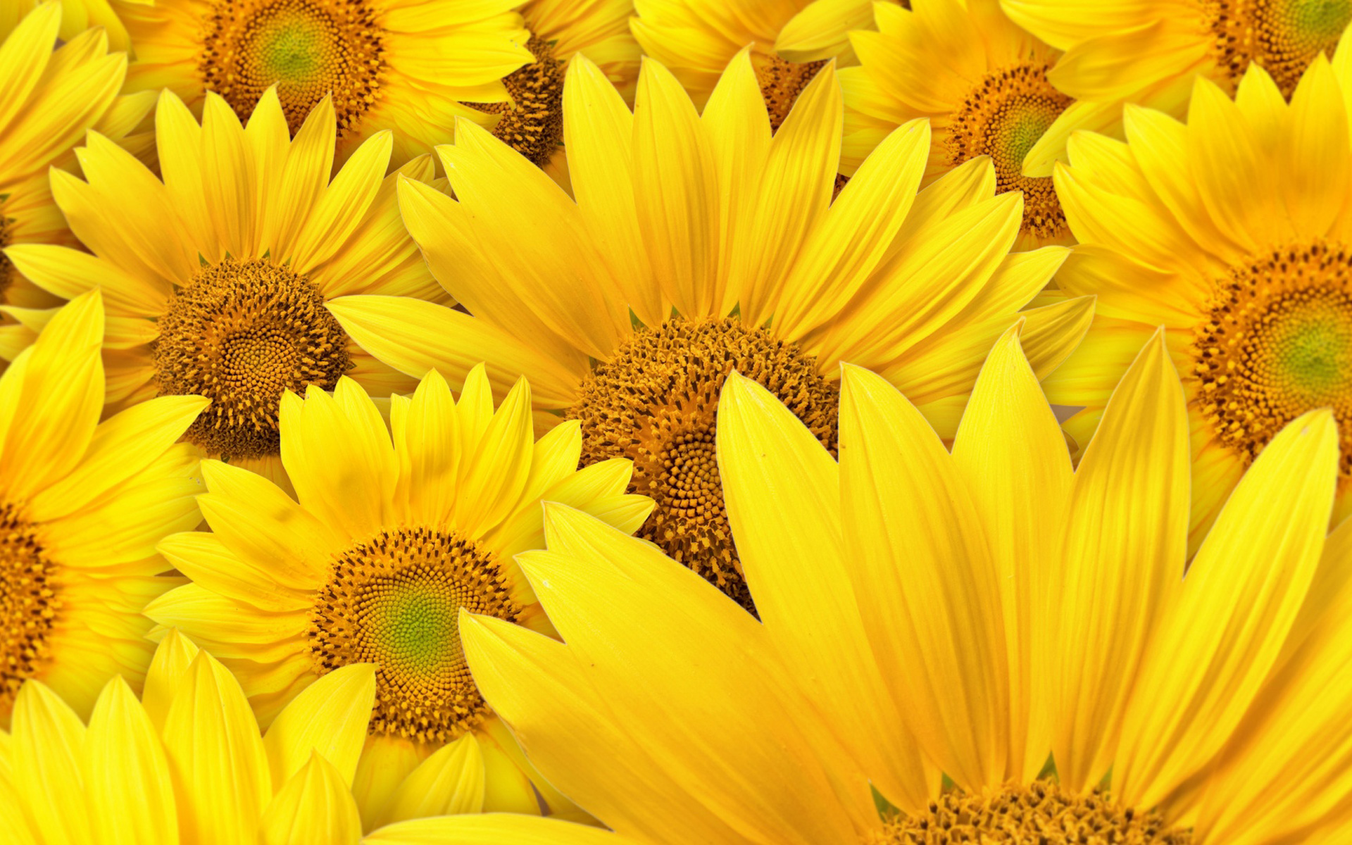 Download These 42 Yellow Wallpapers in High Definition For ...
