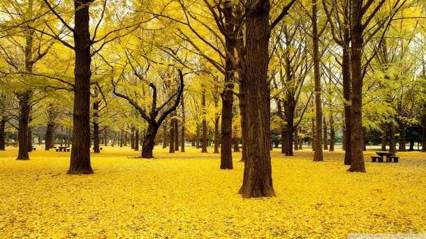 yellow wallpaper 37