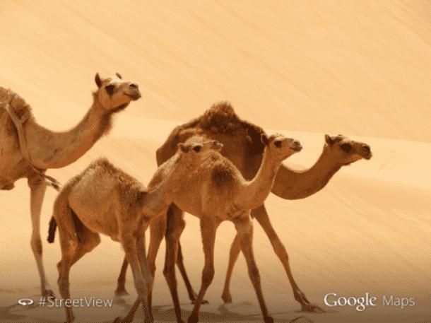 Google Maps Liwa Desert in Abu Dhabi