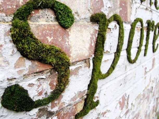 Moss Graffiti – How to Do It