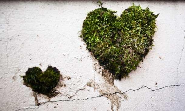 Moss Graffiti – How to Do It16