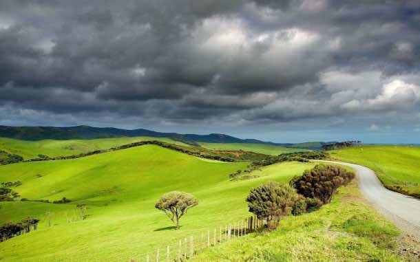 New-Zealand-Grasslands