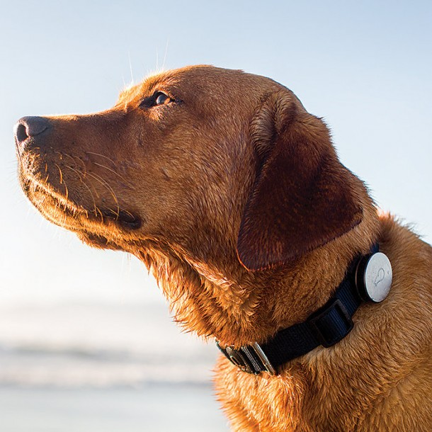 Whistle Activity Monitor – The fitness tracker for your pets2