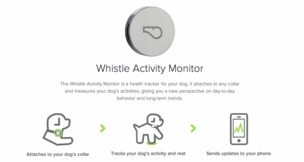 Whistle Activity Monitor – The fitness tracker for your pets3