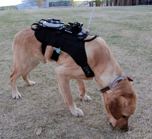 Check Out this Harness that Lets you Communicate with Your Dog3