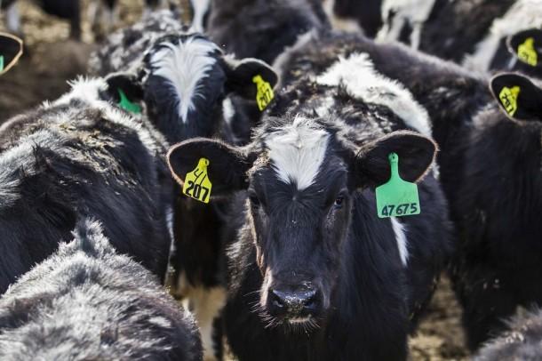 Muufri – The Alternative for Cow Milk2