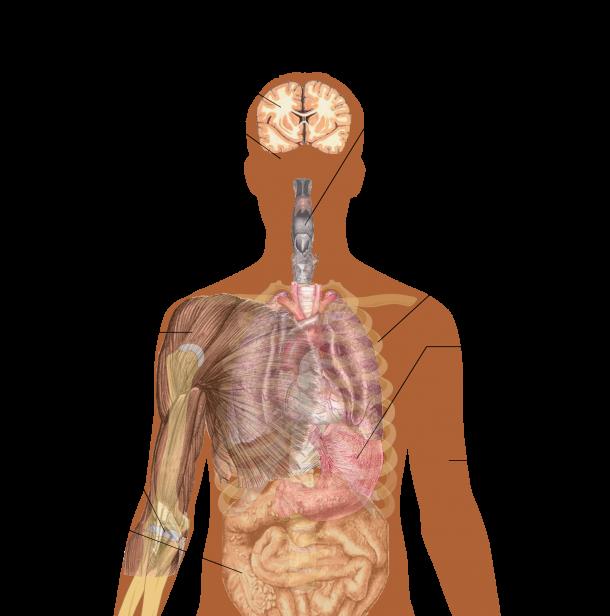 Smart Paper Capable of Diagnosing Ebola4