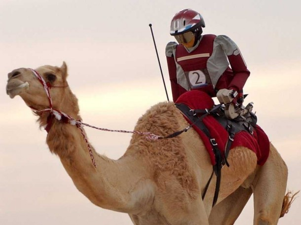 in-dubai-300-robots-are-replacing-illegal-child-labor-in-camel-racing