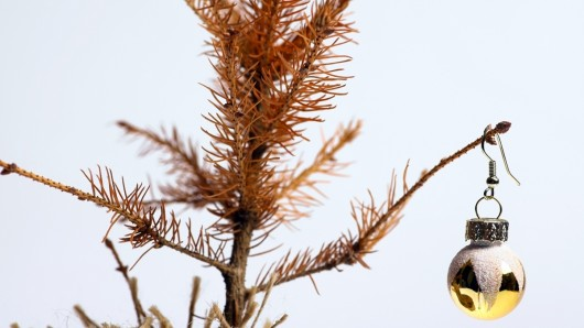Here's How to Prolong The Christmas Tree's Life 3