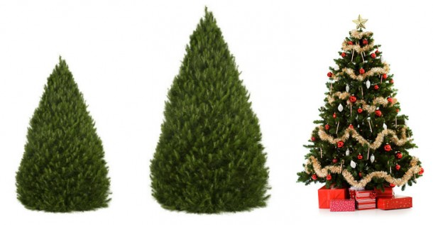 Here's How to Prolong The Christmas Tree's Life 2