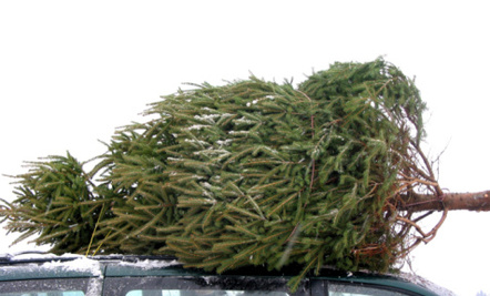 Here's How to Prolong The Christmas Tree's Life 5