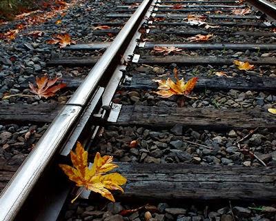 Vaporize Leaves on Rail tracks - Laser Railhead Cleaner3