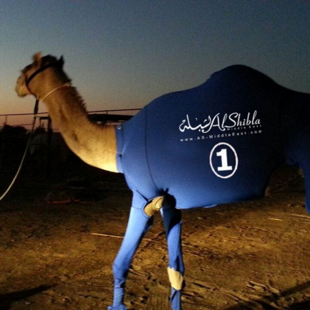 The Camel Suits by Al-Shibla