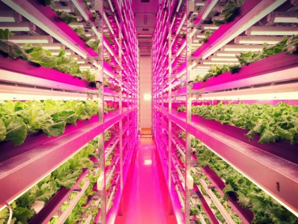 World's Largest Indoor Farm – Producing 100 Times More