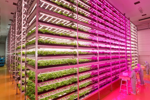 World's Largest Indoor Farm – Producing 100 Times More2