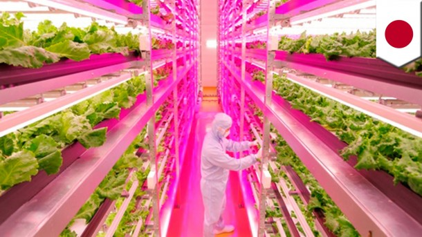 World's Largest Indoor Farm – Producing 100 Times More3