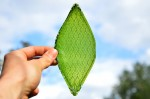 Artificial Leaf can Create Oxygen in Space