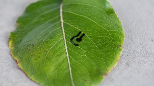 Bio-inks – Draw Sensors on Materials