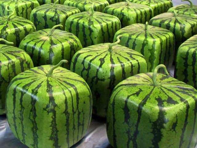 square-watermelon-photo