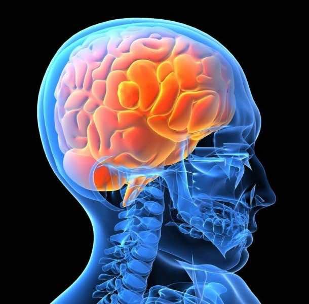 1. A $1,000 Human Brain