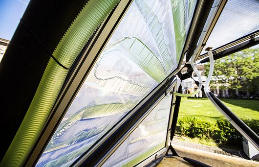 Algae Canopy