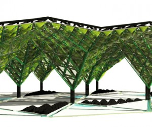 Algae Canopy4