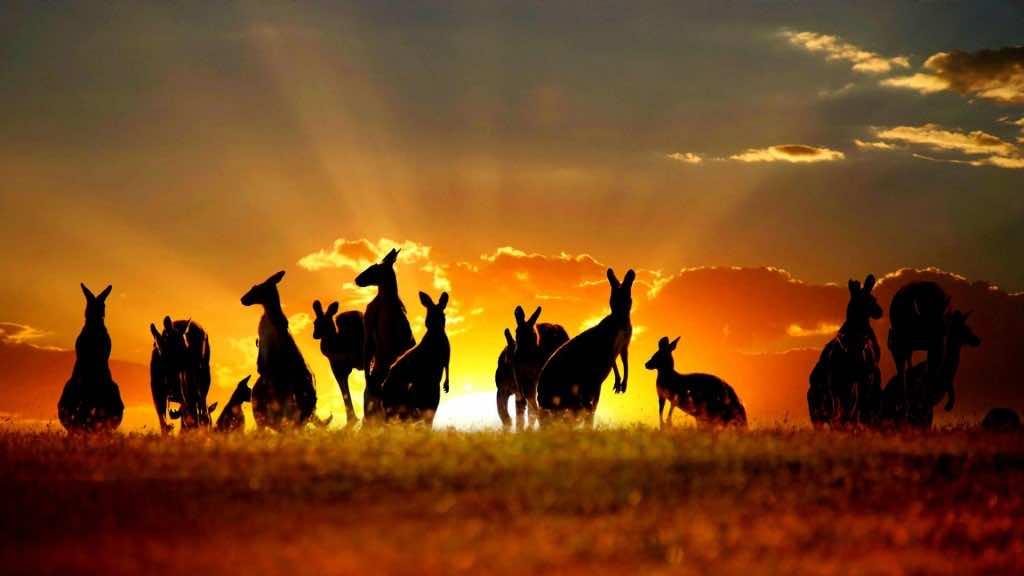 Australia wallpaper 16