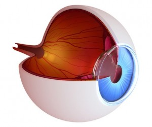 Optogenetic Therapy Will Reverse The Inherited Blindness 2