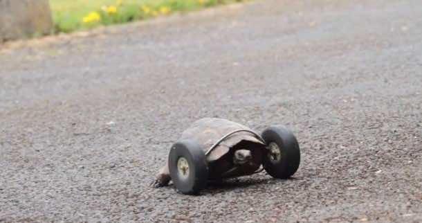 Tortoise front wheels