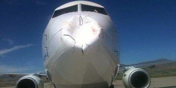 bird hits4