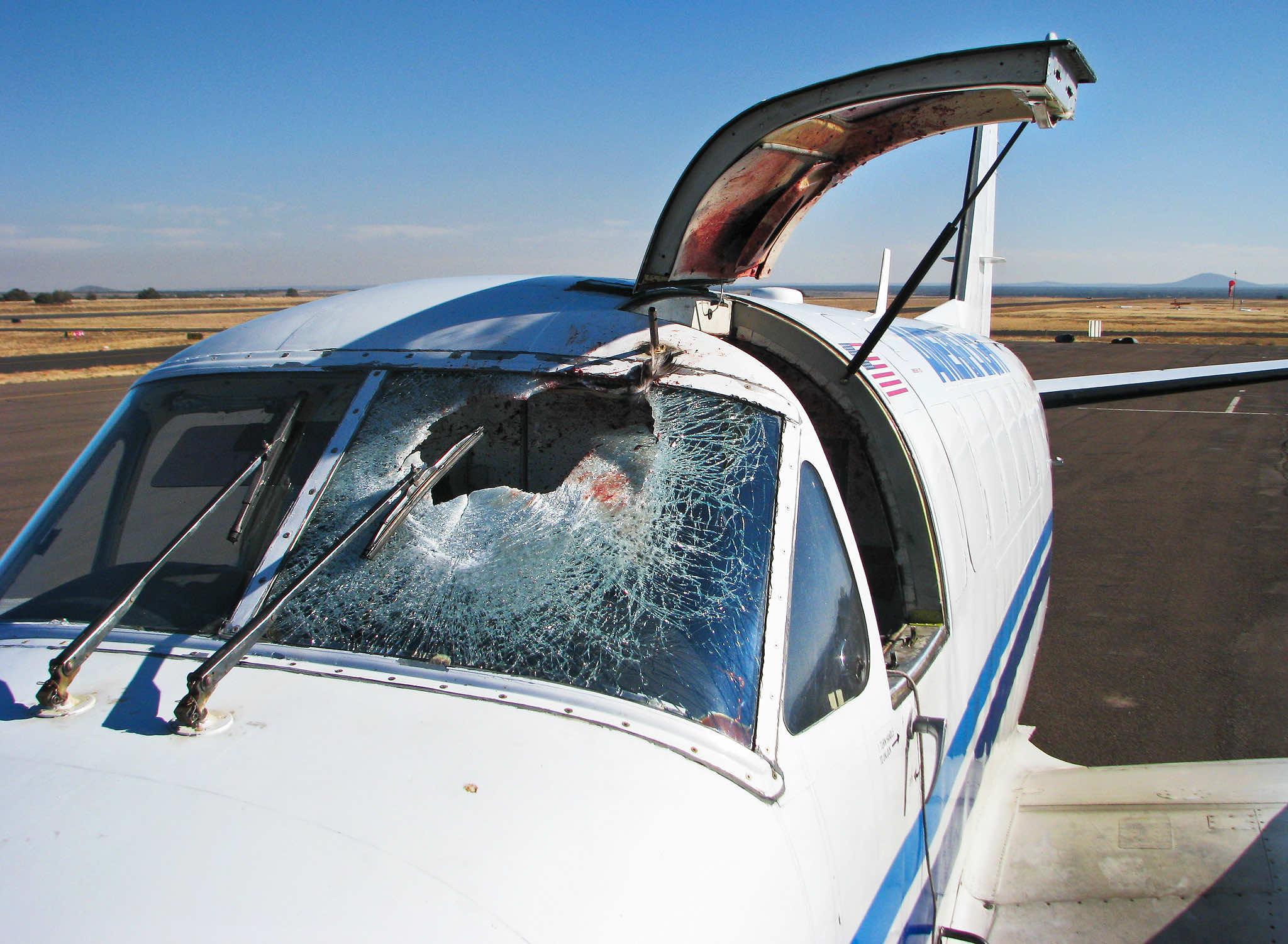Airlines Bird Strikes