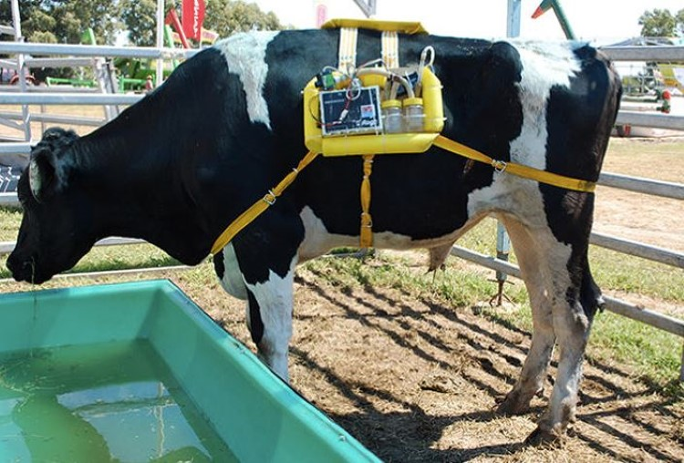 cow methane backpack