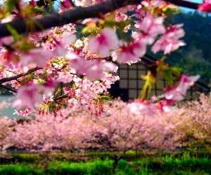 japan wallpaper 13