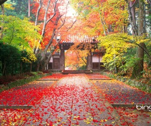 Colorful Autumn scene in Komyo-Ji