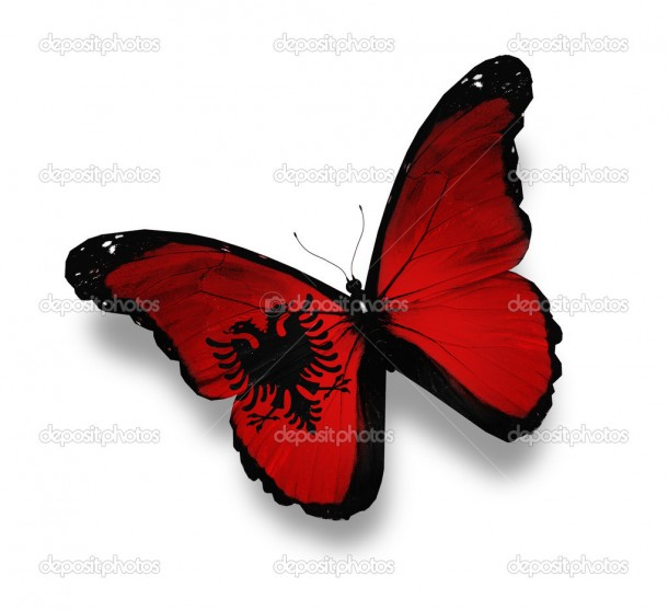 Albanian flag butterfly, isolated on white
