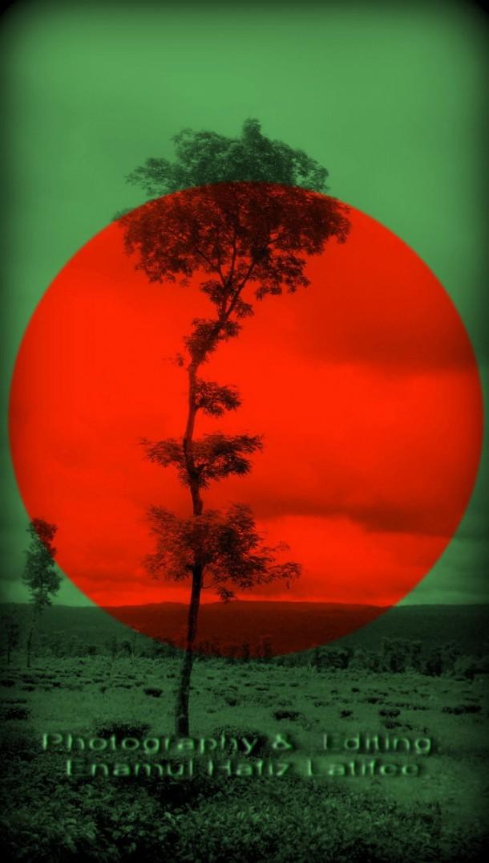 Bangladesh Flag  (18)