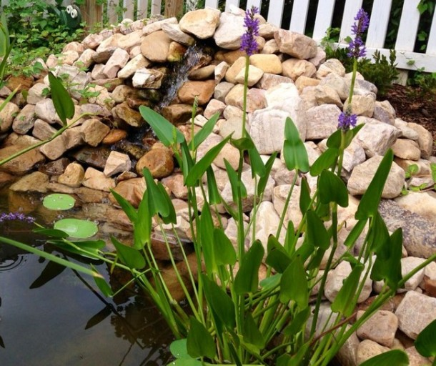 Learn How To Make An Inexpensive Pond For Your Front Yard 7