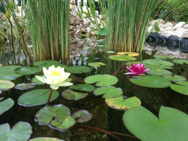 Learn How To Make An Inexpensive Pond For Your Front Yard 8