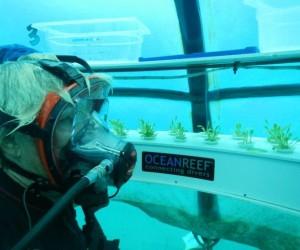 Nemo garden4