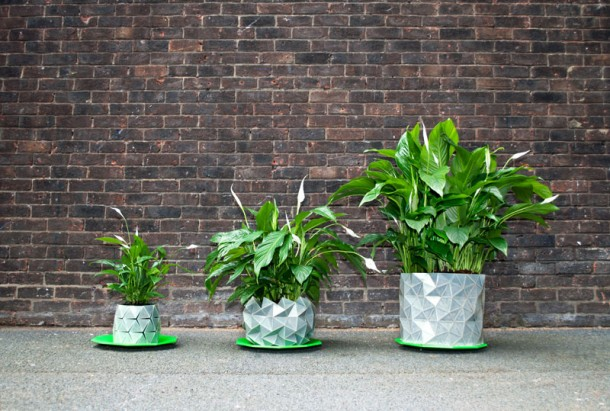 Pot grows with plant