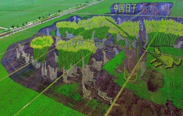 Rice art china Liaoning11