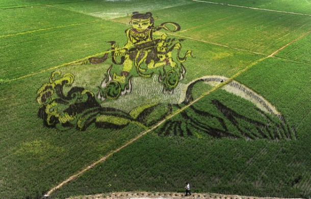 Rice art china Liaoning12
