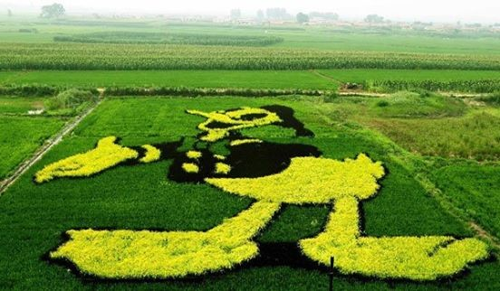 Rice art china Liaoning3