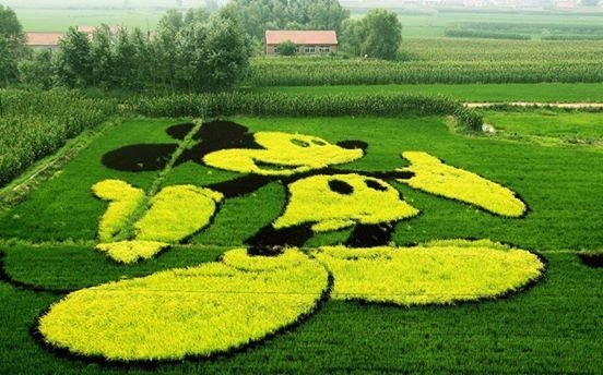Rice art china Liaoning4