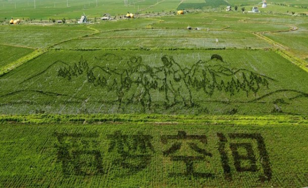 Rice art china Liaoning9