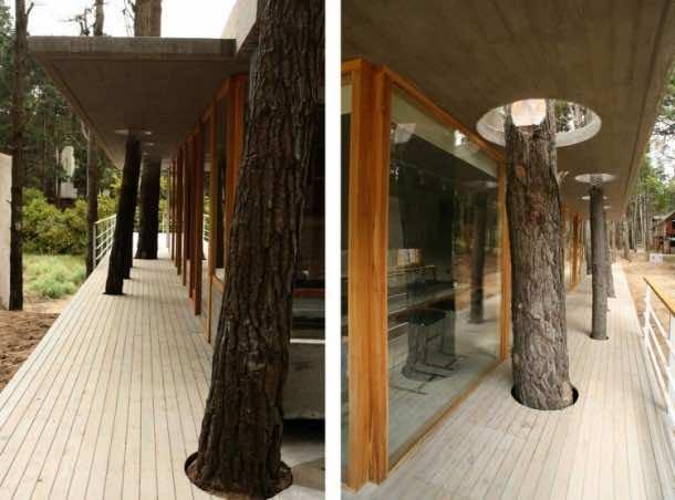 Amazing treehouse 30