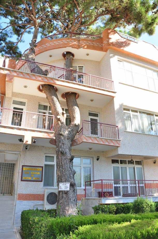 Amazing treehouse 32