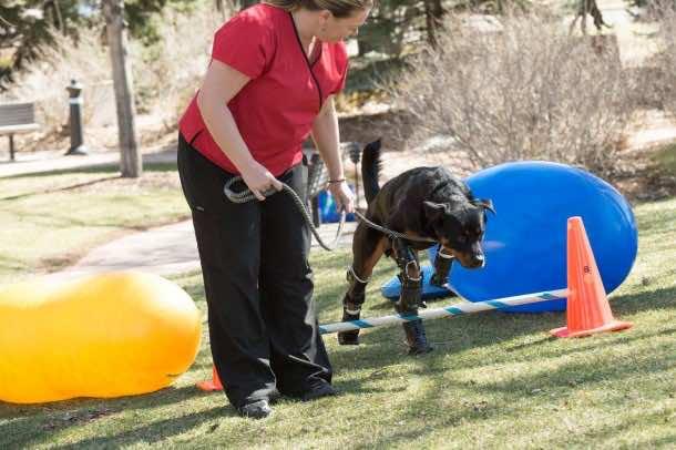 Dog Receives Four Prosthetic Paws 2