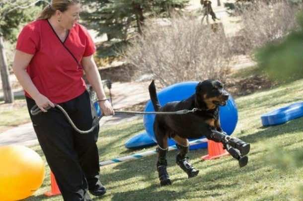 Dog Receives Four Prosthetic Paws