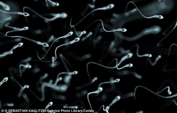 First Lab-Grown Human Sperm Technique Explained 3